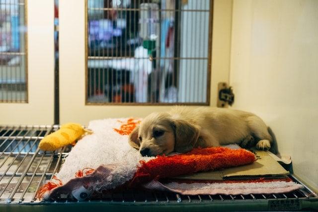 vestibularsyndrom hund
