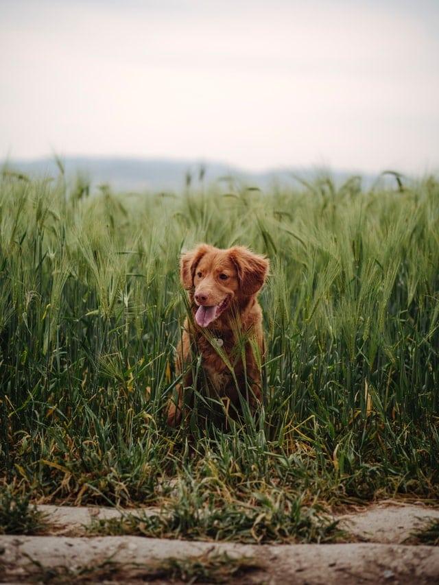 duerfen hunde mais essen