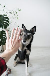 hunde lernen tricks