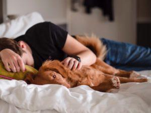 vertrauensvolle bindung hund