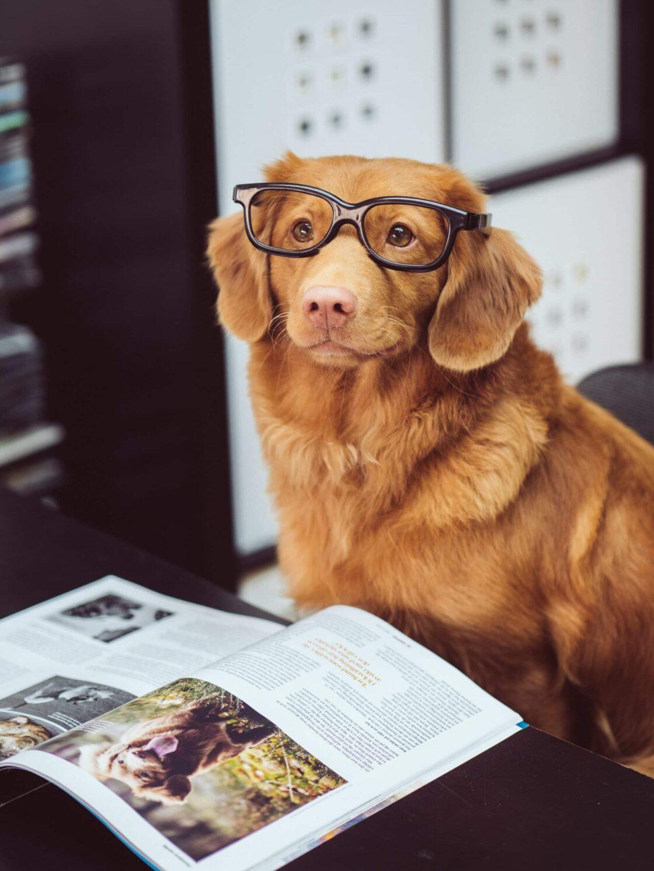 Habe ich Zeit während des Studiums für einen Hund