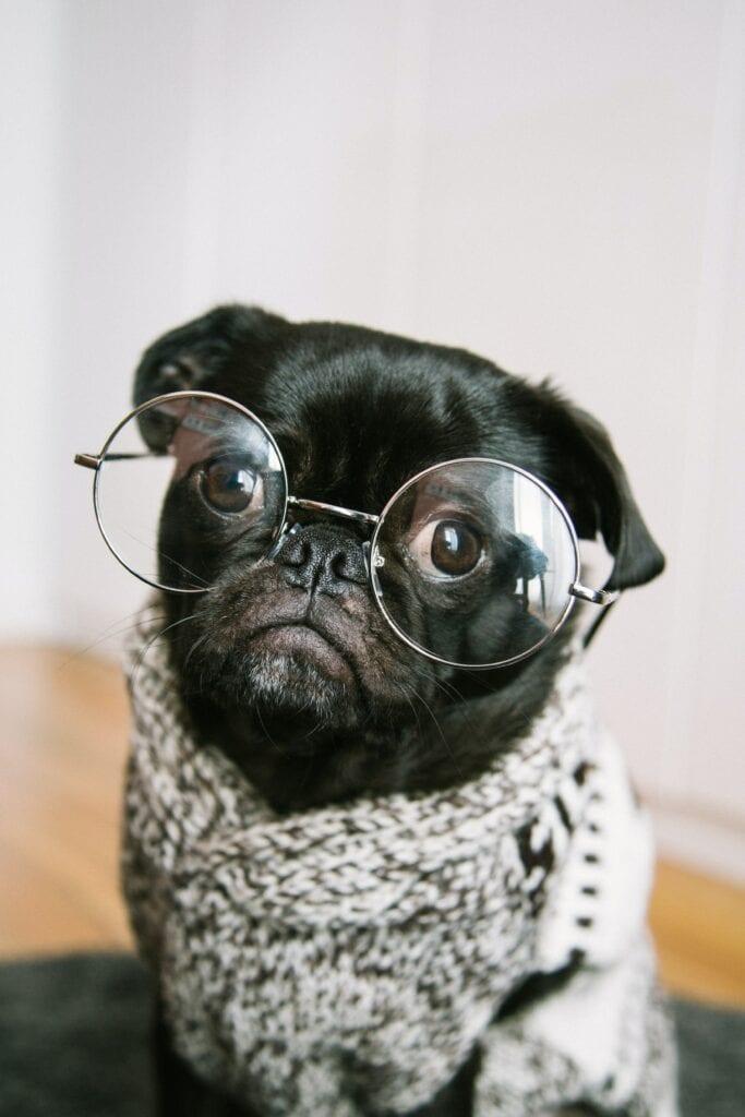 Hund waehrend des Studiums ist das moeglich